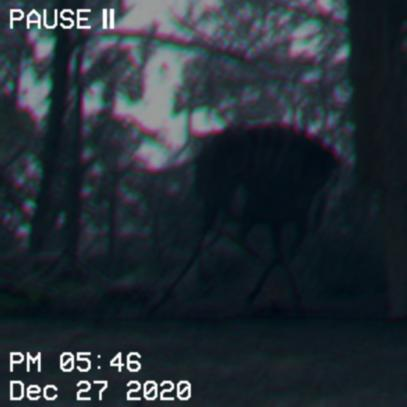 a strange thing in a trail cam…